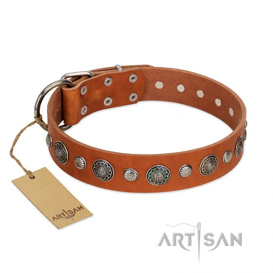 """Natural Beauty"" FDT Artisan Tan Leather American Bulldog Collar with Shining Silver-like Studs"