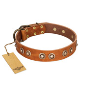 """Precious Relic"" FDT Artisan Tan Leather American Bulldog Collar Adorned with Old Bronze Look Studs"