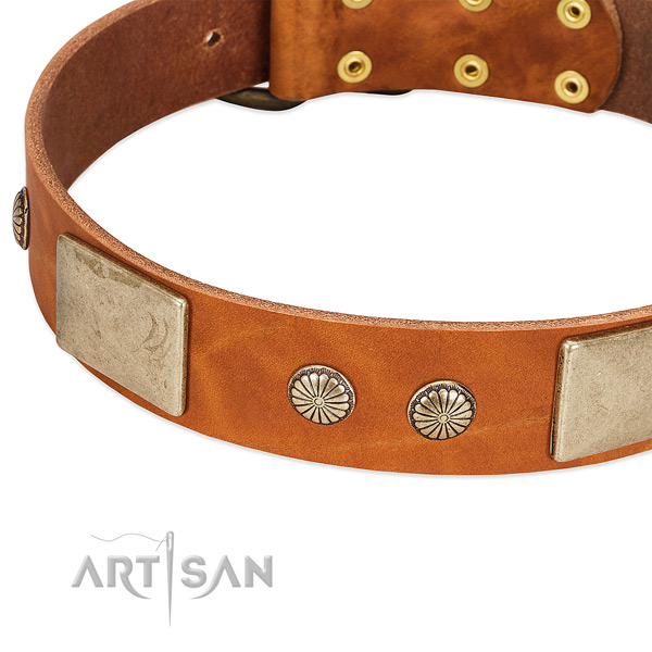 Rust resistant studs on genuine leather dog collar for your dog