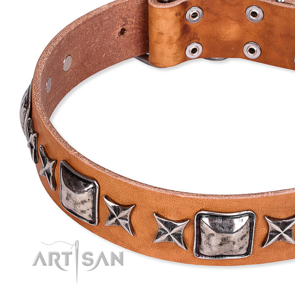 Stylish walking embellished dog collar of top quality full grain leather
