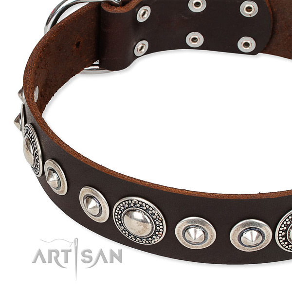 Basic training studded dog collar of reliable full grain leather