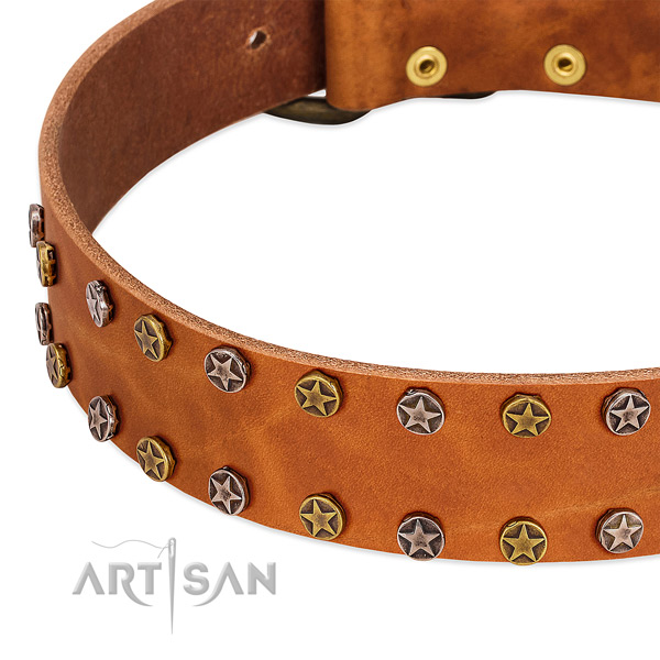 Fancy walking full grain leather dog collar with significant studs