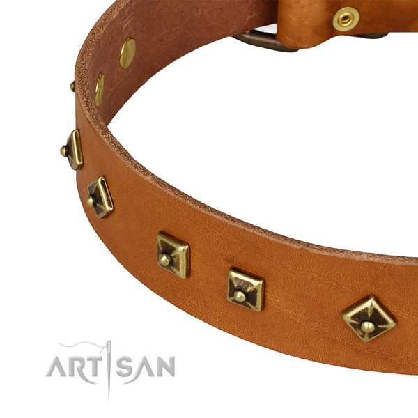 Significant leather collar for your impressive pet