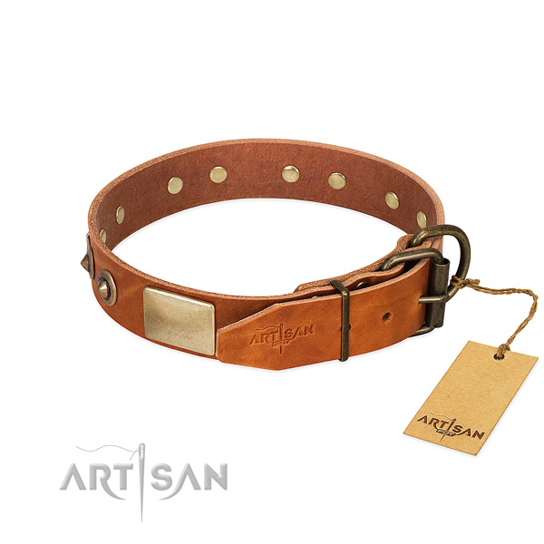 Rust resistant adornments on stylish walking dog collar
