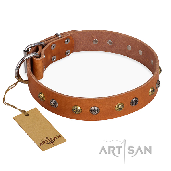 Daily walking amazing dog collar with corrosion resistant fittings