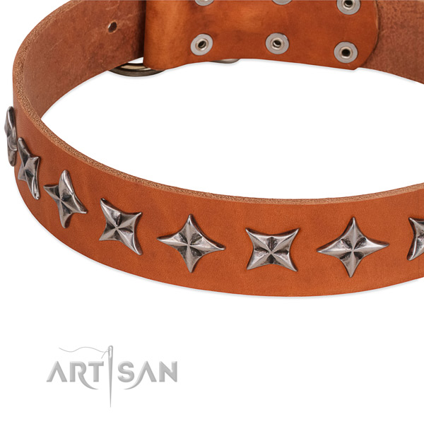 Comfortable wearing studded dog collar of strong leather