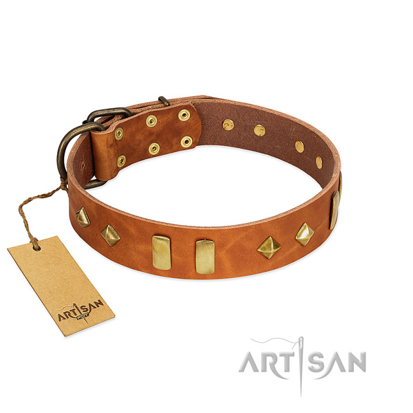 Daily walking top rate full grain leather dog collar with embellishments
