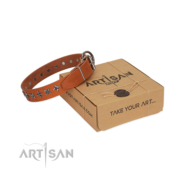 Stylish walking dog collar of durable leather with embellishments