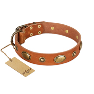 """Visual Magic"" FDT Artisan Tan Leather American Bulldog Collar for Daily Activities"