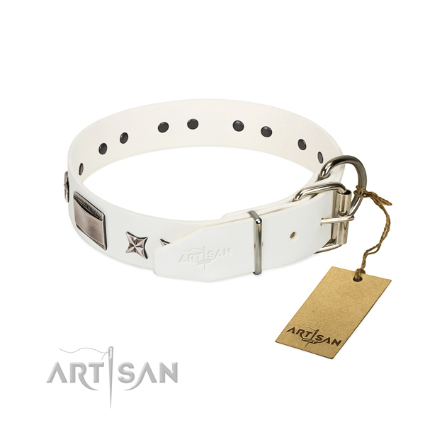 Studded collar of full grain leather for your handsome pet