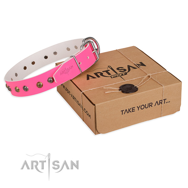 Daily walking dog collar with Designer corrosion resistant studs