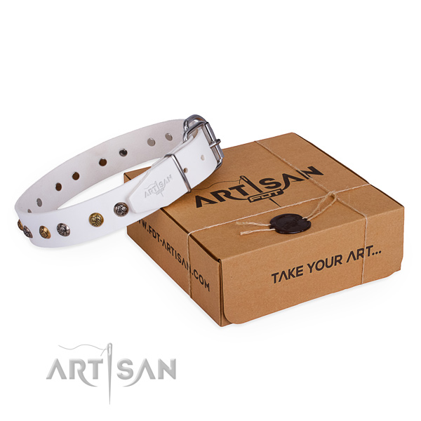 Everyday use dog collar with Stylish corrosion proof studs