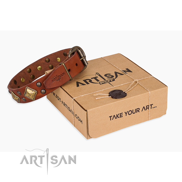 Stylish walking dog collar with Extraordinary rust-proof adornments