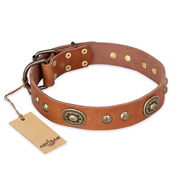 """Stunning Dress"" FDT Artisan Tan Leather American Bulldog Collar with Old Bronze Look Plates and Studs"