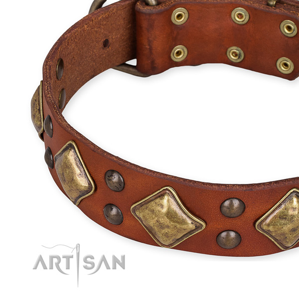 Genuine leather collar with corrosion proof hardware for your stylish canine