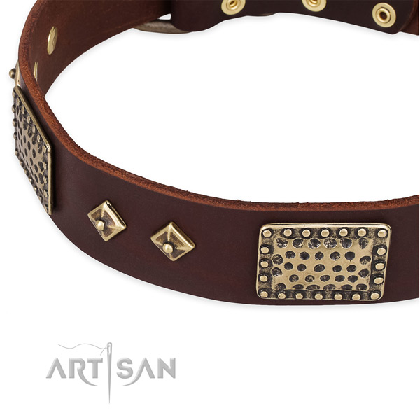 Reliable adornments on leather dog collar for your four-legged friend
