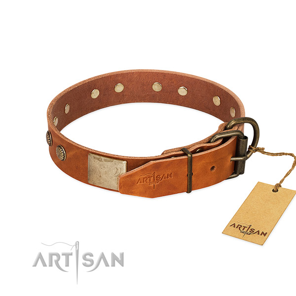 Rust resistant D-ring on daily walking dog collar