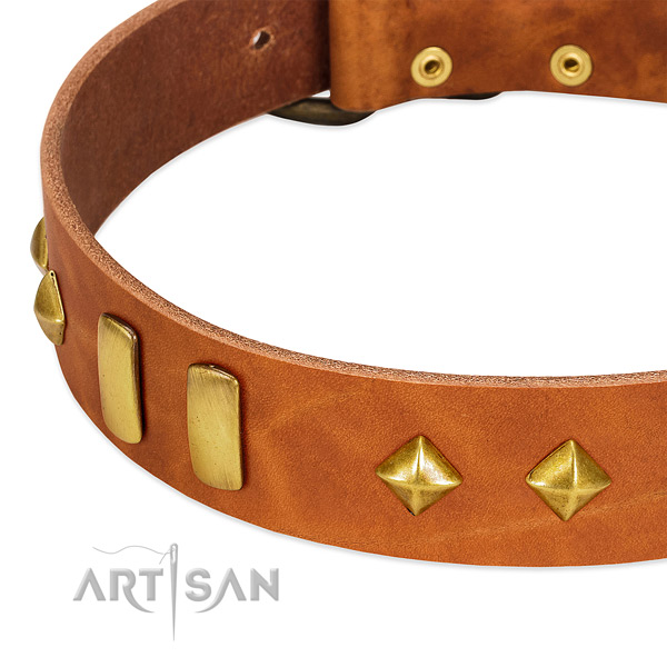 Daily walking full grain leather dog collar with stylish embellishments