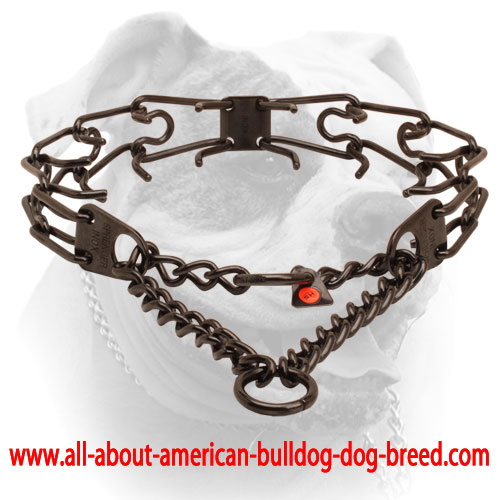 Pinch collar of corrosion resistant black stainless steel for poorly behaved dogs