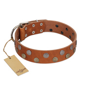 """Ancient Symbol"" Trendy FDT Artisan Tan Leather American Bulldog Collar with Silver- and Gold-Like Studs"