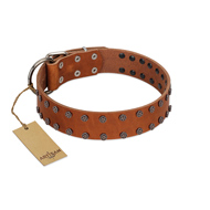 """Star Light"" Stylish FDT Artisan Tan Leather American Bulldog Collar with Silver-Like Studs"