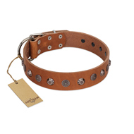 """Silver Age"" Fashionable FDT Artisan Tan Leather American Bulldog Collar with Silver-Like Studs"