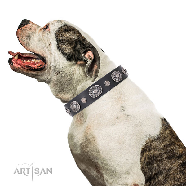 Corrosion resistant buckle and D-ring on leather dog collar for walking in style