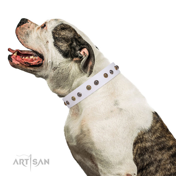 Easy wearing adorned dog collar made of top notch natural leather