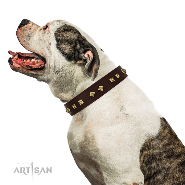 Exquisite decorations on everyday walking full grain natural leather dog collar