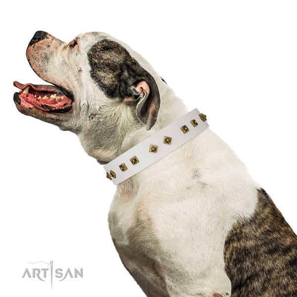 Exceptional studs on easy wearing dog collar