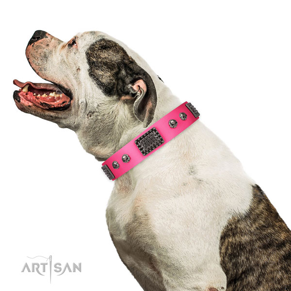 Remarkable leather collar for your attractive four-legged friend
