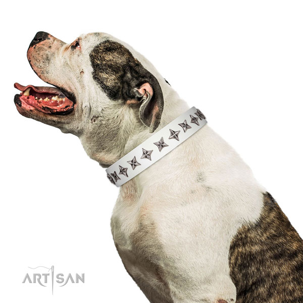 Finest quality full grain genuine leather dog collar with designer studs