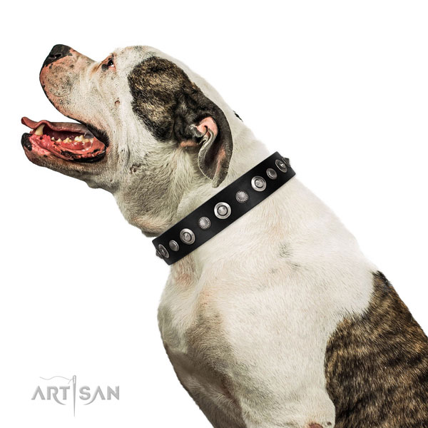 Strong full grain natural leather dog collar with awesome adornments