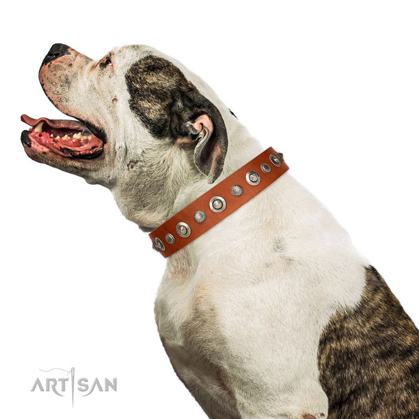 Top quality natural leather dog collar with extraordinary studs