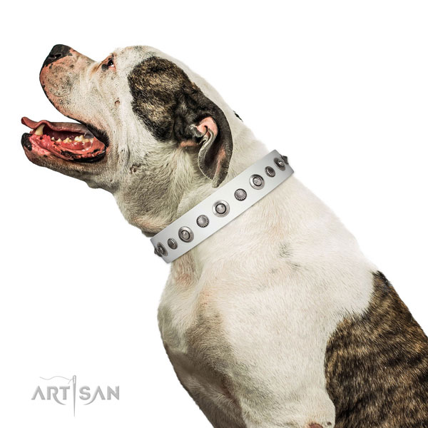 Full grain leather collar with strong hardware for your lovely doggie