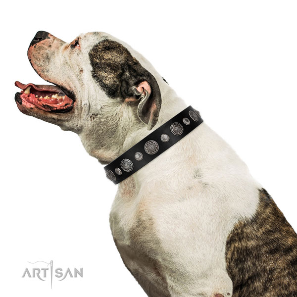 Genuine leather collar with corrosion resistant buckle for your impressive canine