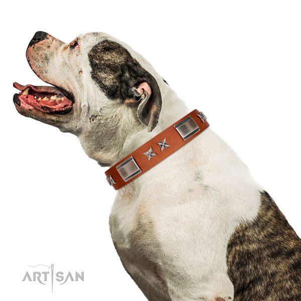 Handy use reliable full grain leather dog collar with embellishments
