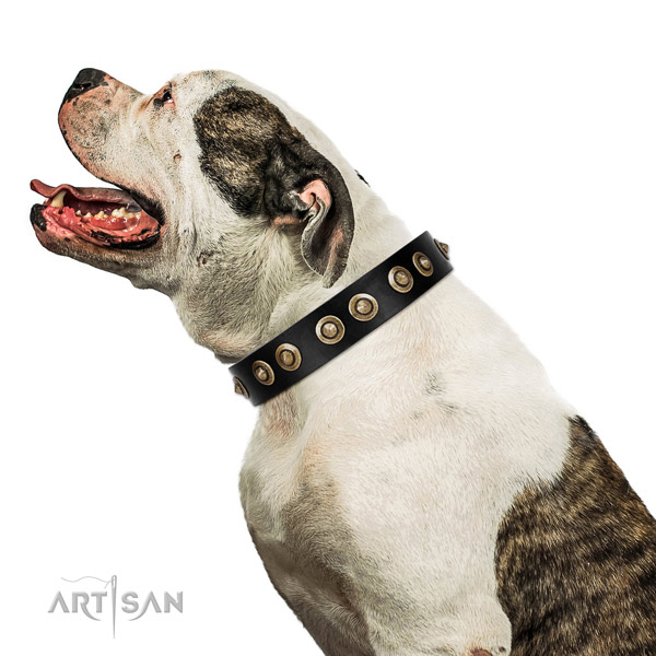 Comfy wearing dog collar of natural leather with fashionable studs