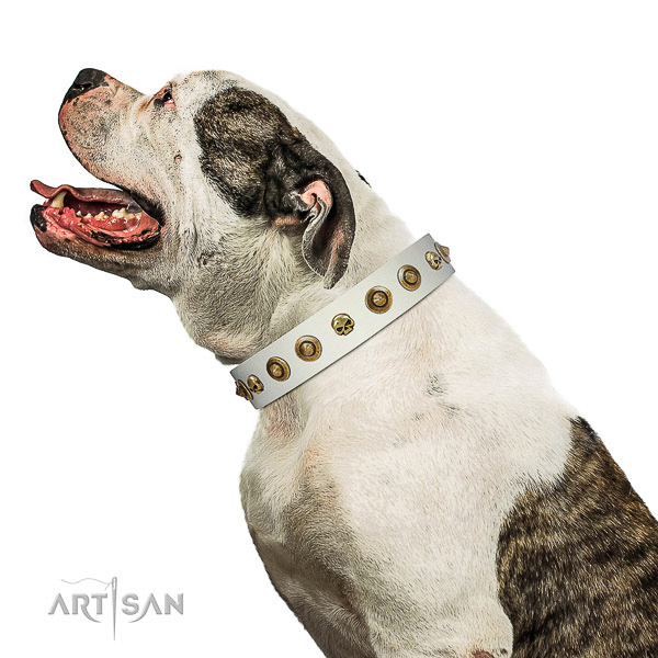 Strong leather dog collar with decorations for your doggie