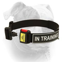 All Weather Nylon Collar With ID Badges For American Bulldog