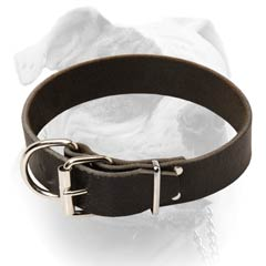 American Bulldog breed collar steel buckle
