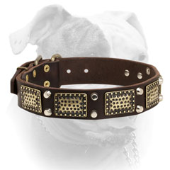 Extra wide leather American Bulldog collar