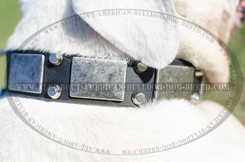 Stylish nickel plates and cones for leather American Bulldog collar