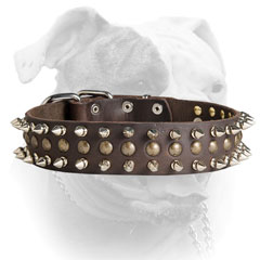 Leather American Bulldog collar with spikes and studs