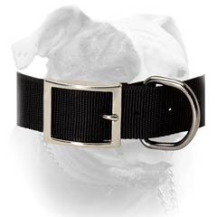 Buckled Nylon Collar For American Bulldog