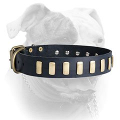 Leather American Bulldog collar with brass plates