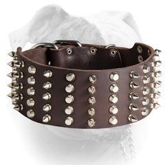 Shiny spikes and studs for leather American Bulldog collar