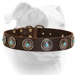 Leather American Bulldog collar decorated with blue stones