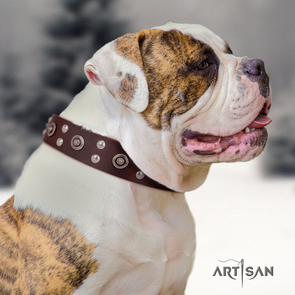 American Bulldog impressive full grain leather dog collar with embellishments