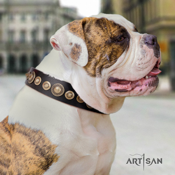 American Bulldog awesome genuine leather dog collar with decorations